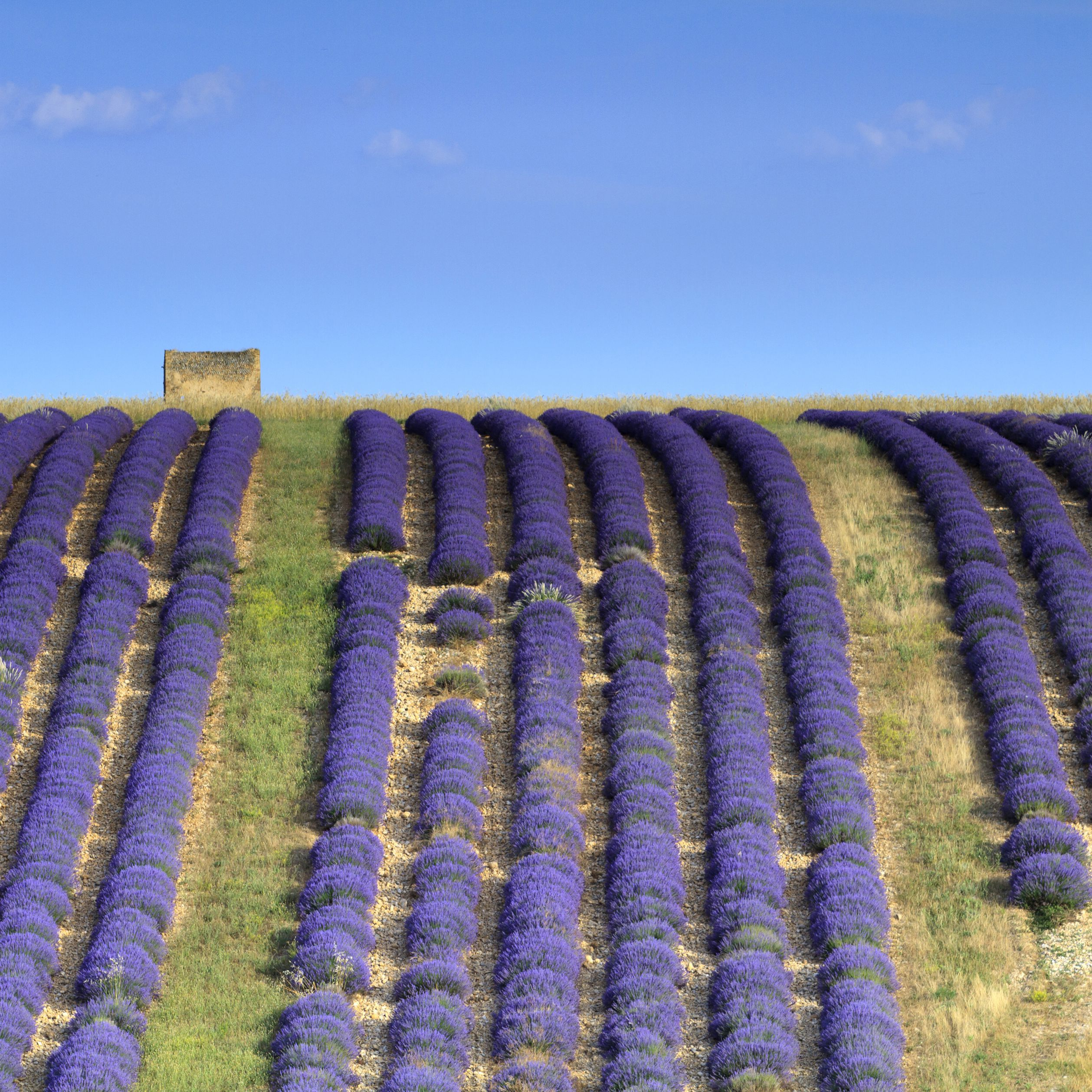 Take a Drive Through the Beautiful French Countryside