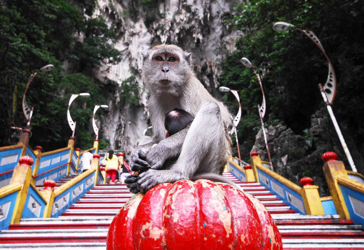 A monkey sitting on a stair case in front of the Batu Caves