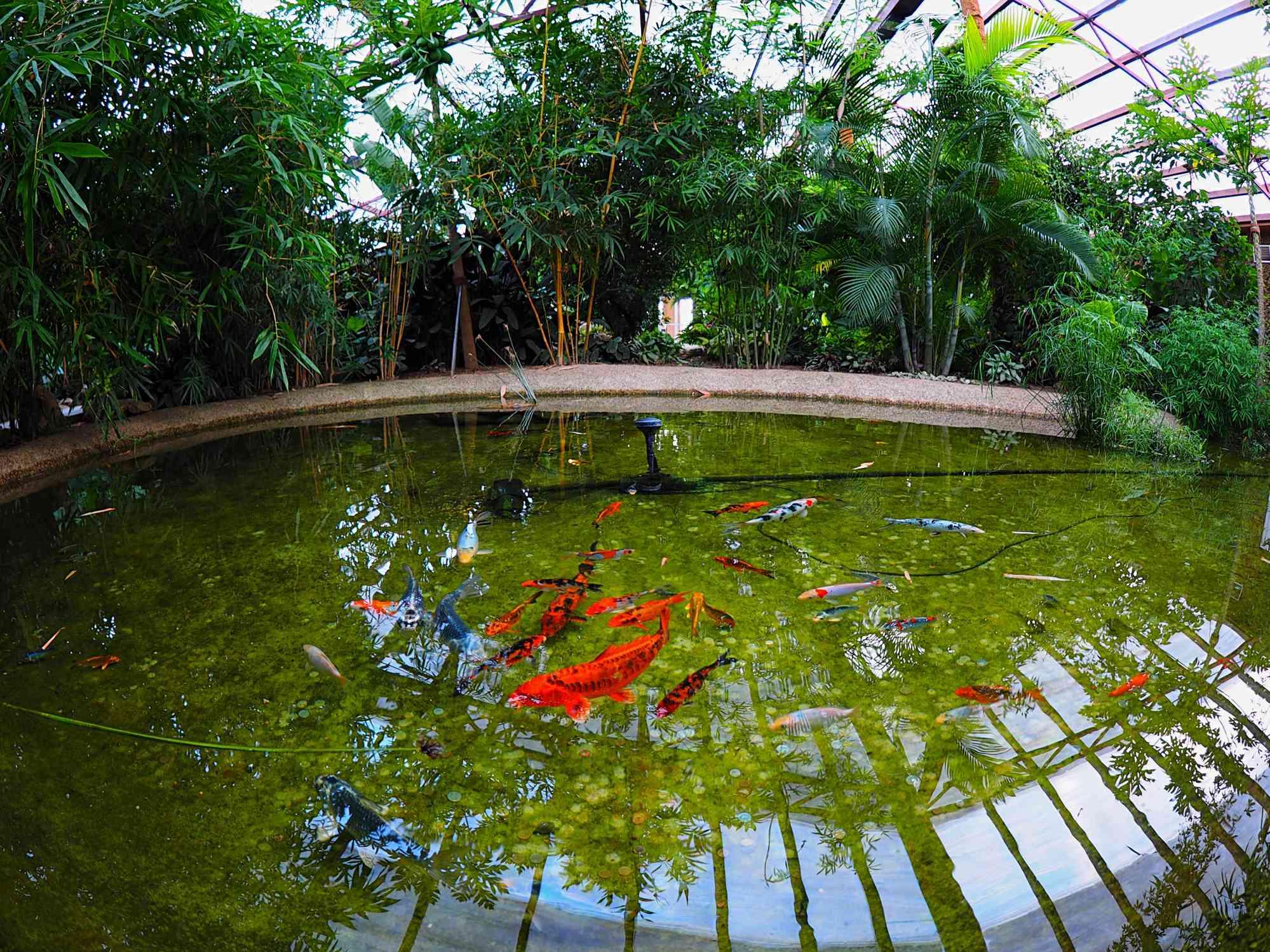 Belgorod Botanical Garden