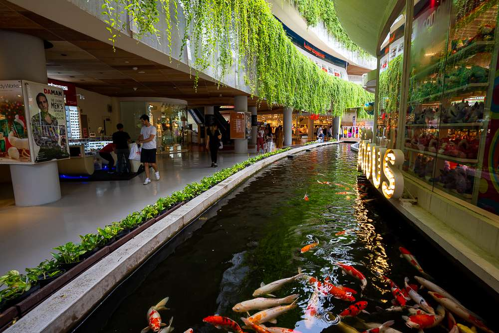 Interior of Beach Walk mall that shows the Koy Fish Pond