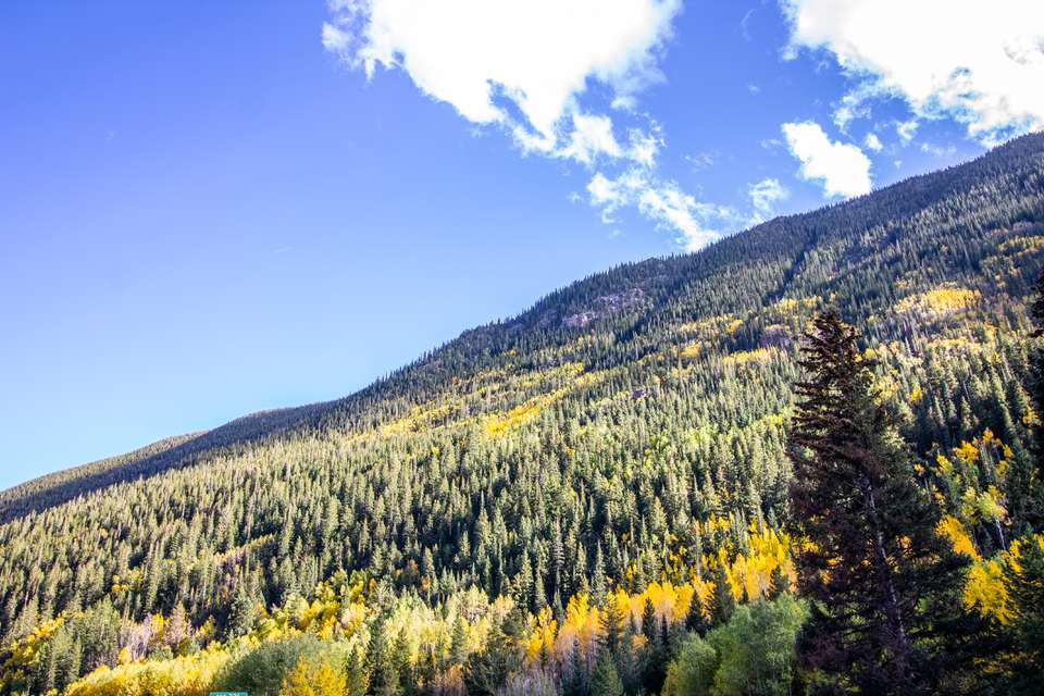 Fall foliage in Colorado