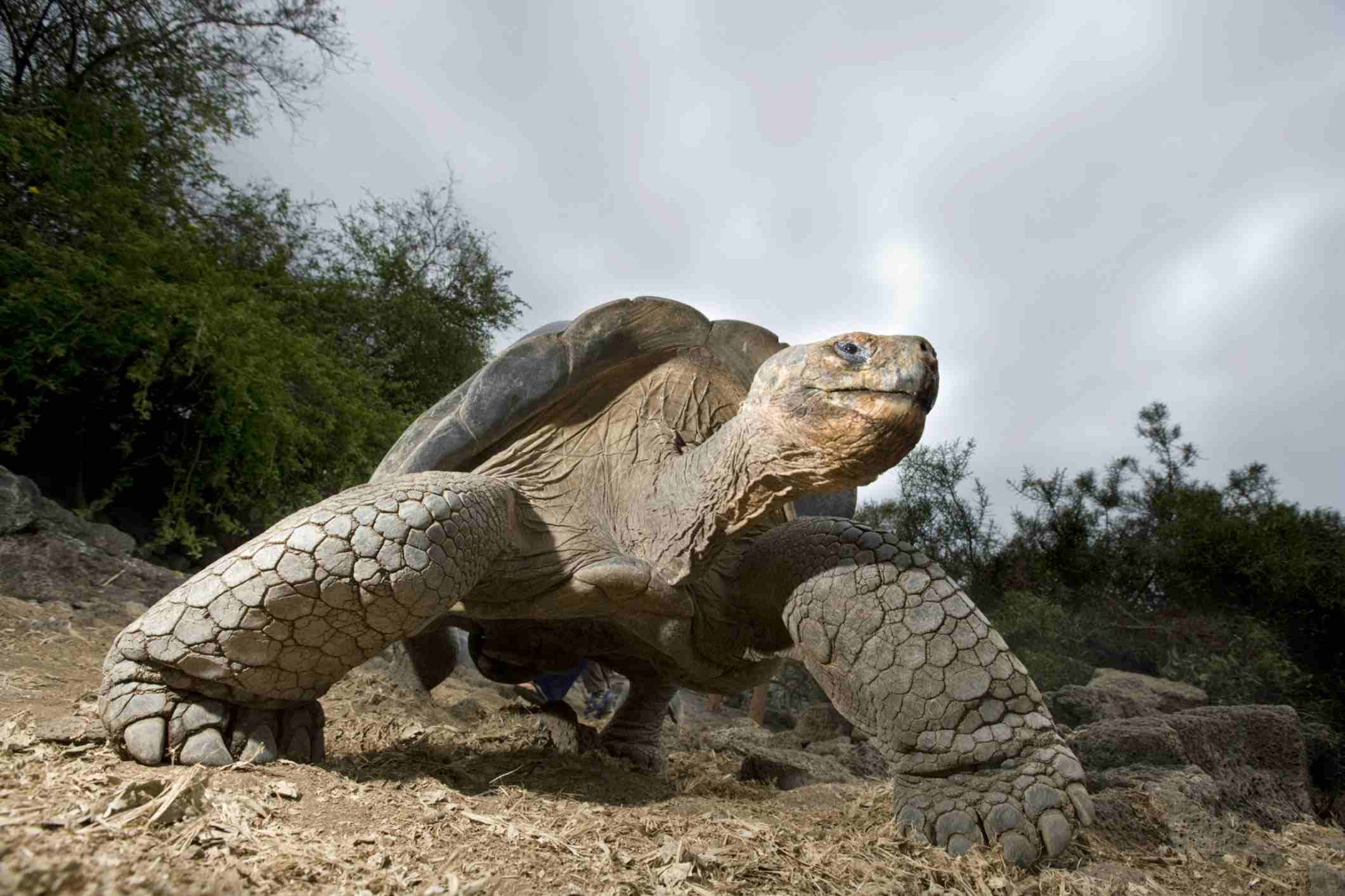 The Galapagos Islands are among Ecuador's most popular destinations for travelers.