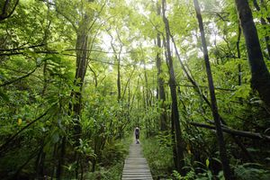 woman hiking on Pipiwai Trail through lush vegetation