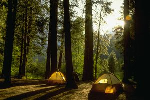 Camping in Yosemite Woods