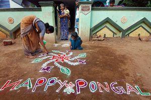 Making Pongal kolam.