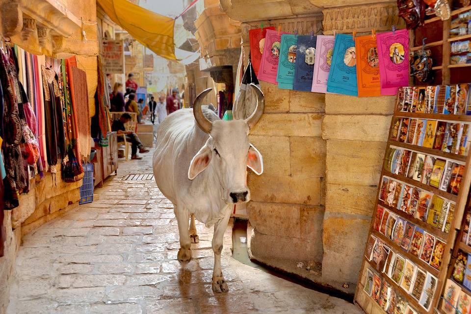 Cow walking through the market