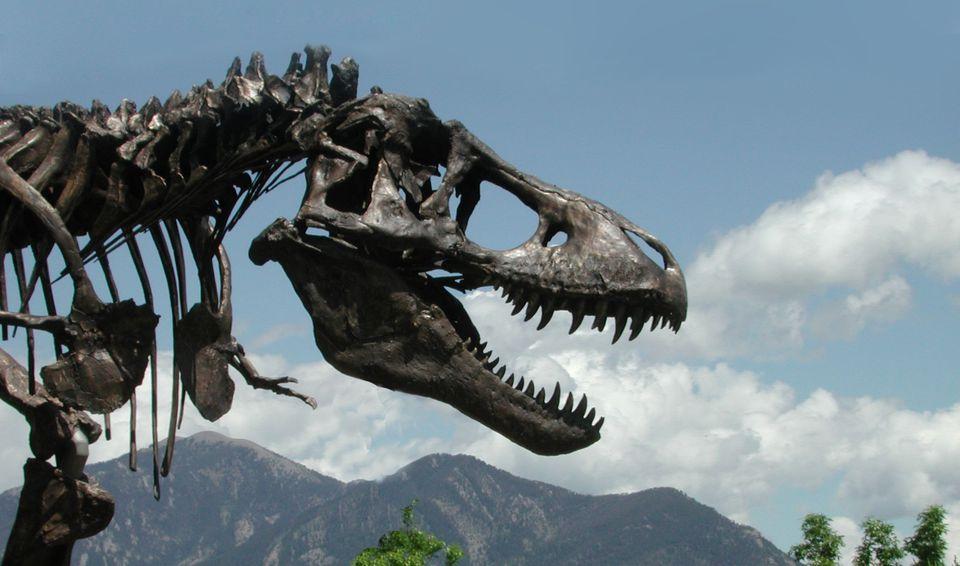 Dinosaur-Mike.jpg
