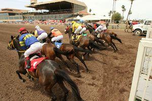 Turf Paradise horse racing track