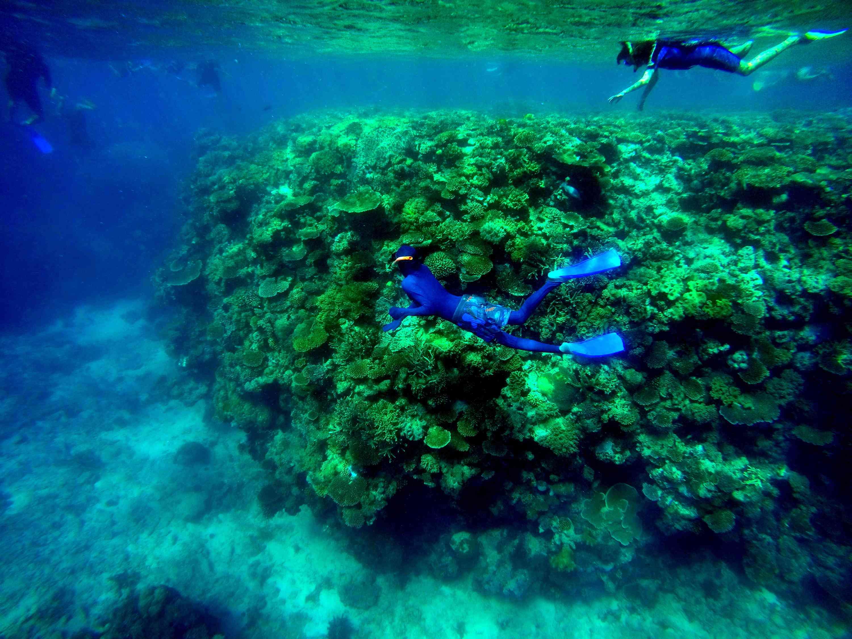Gente haciendo snorkel en el mar en la Gran Barrera de Coral