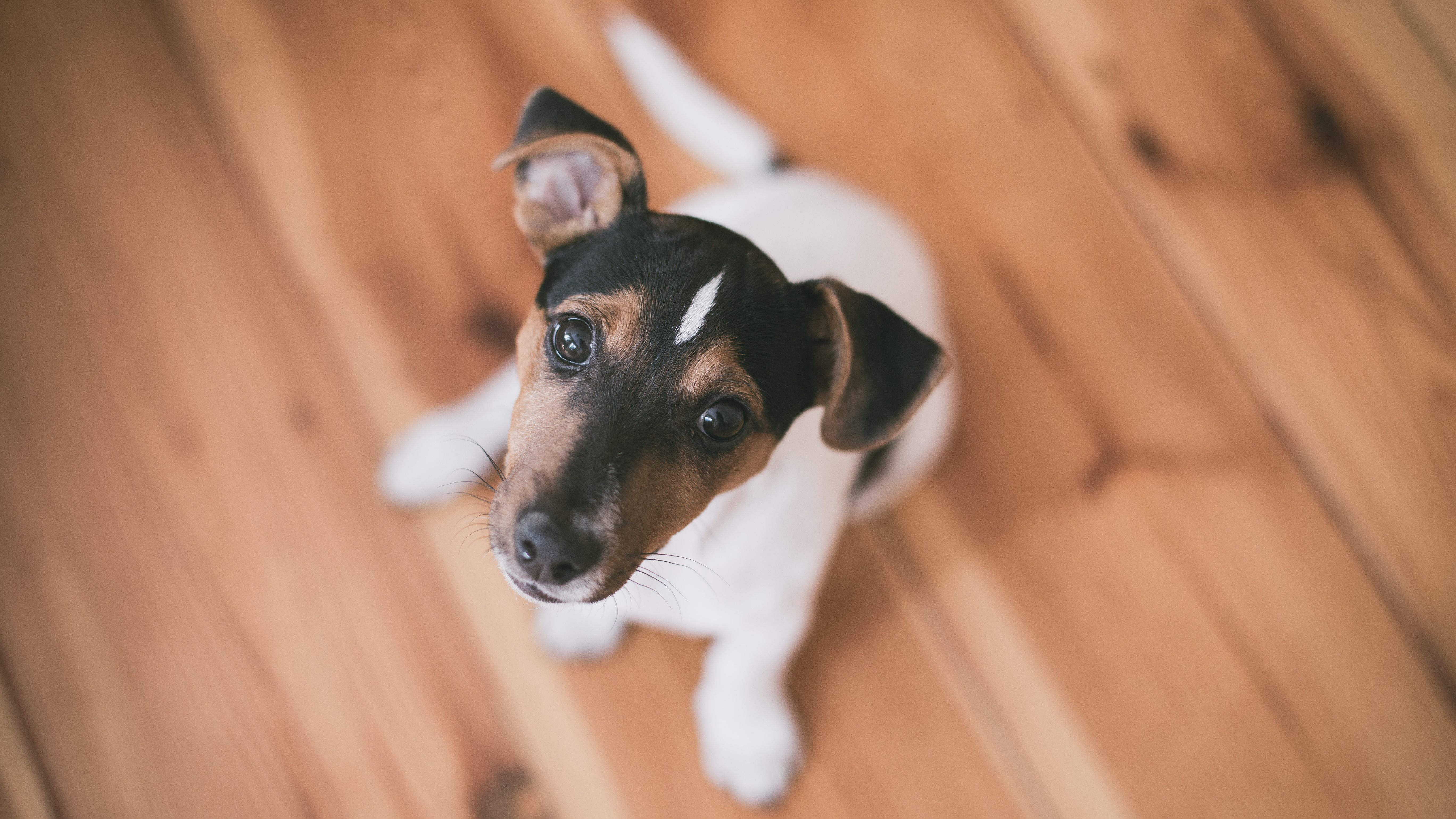 Do I Have to Get a License for My Pet in Toronto?