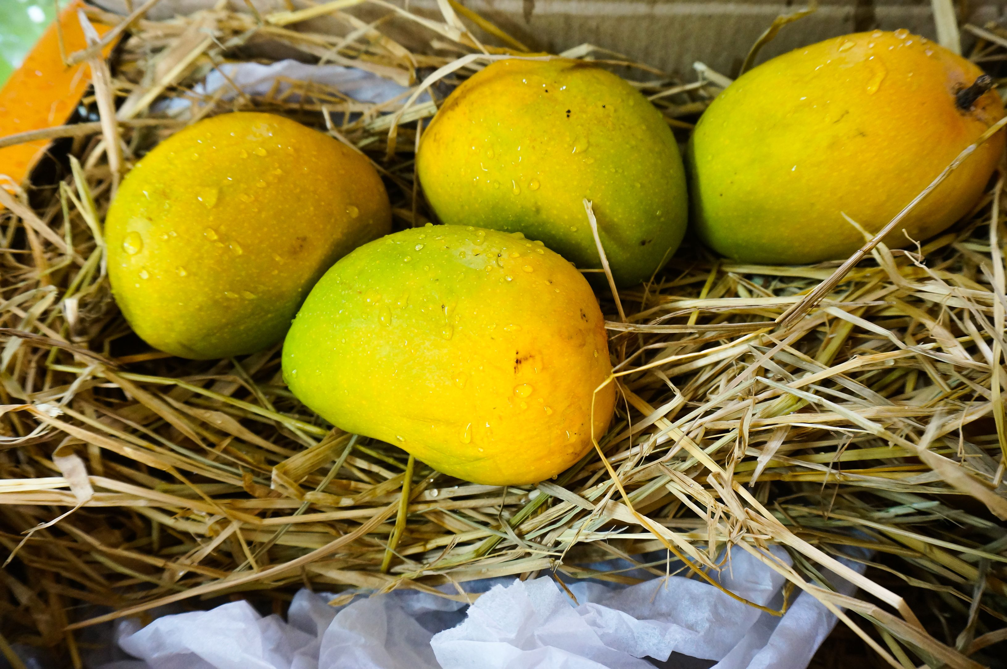 Alphonso mangoes.