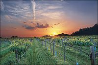 Arkansas winery beauty