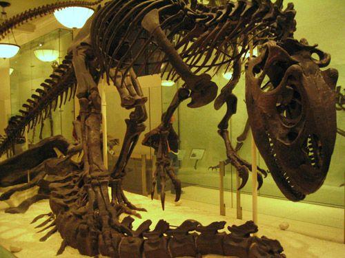 Dinosaurs at AMNH
