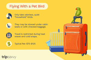 flying with a pet bird