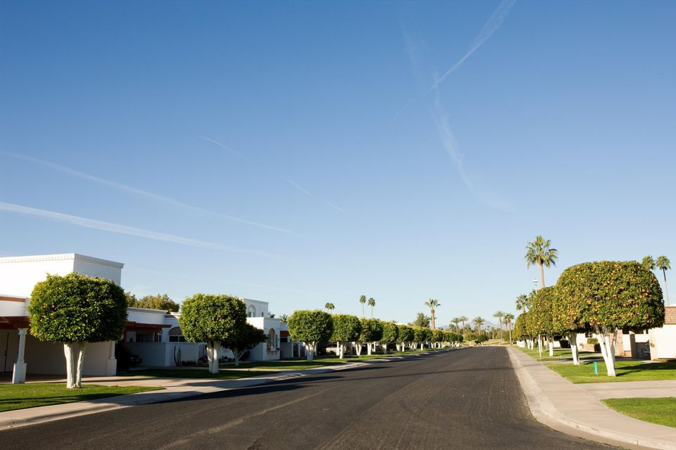Orange trees flank an empty residential street