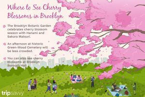 Where to see Brooklyn cherry blossoms