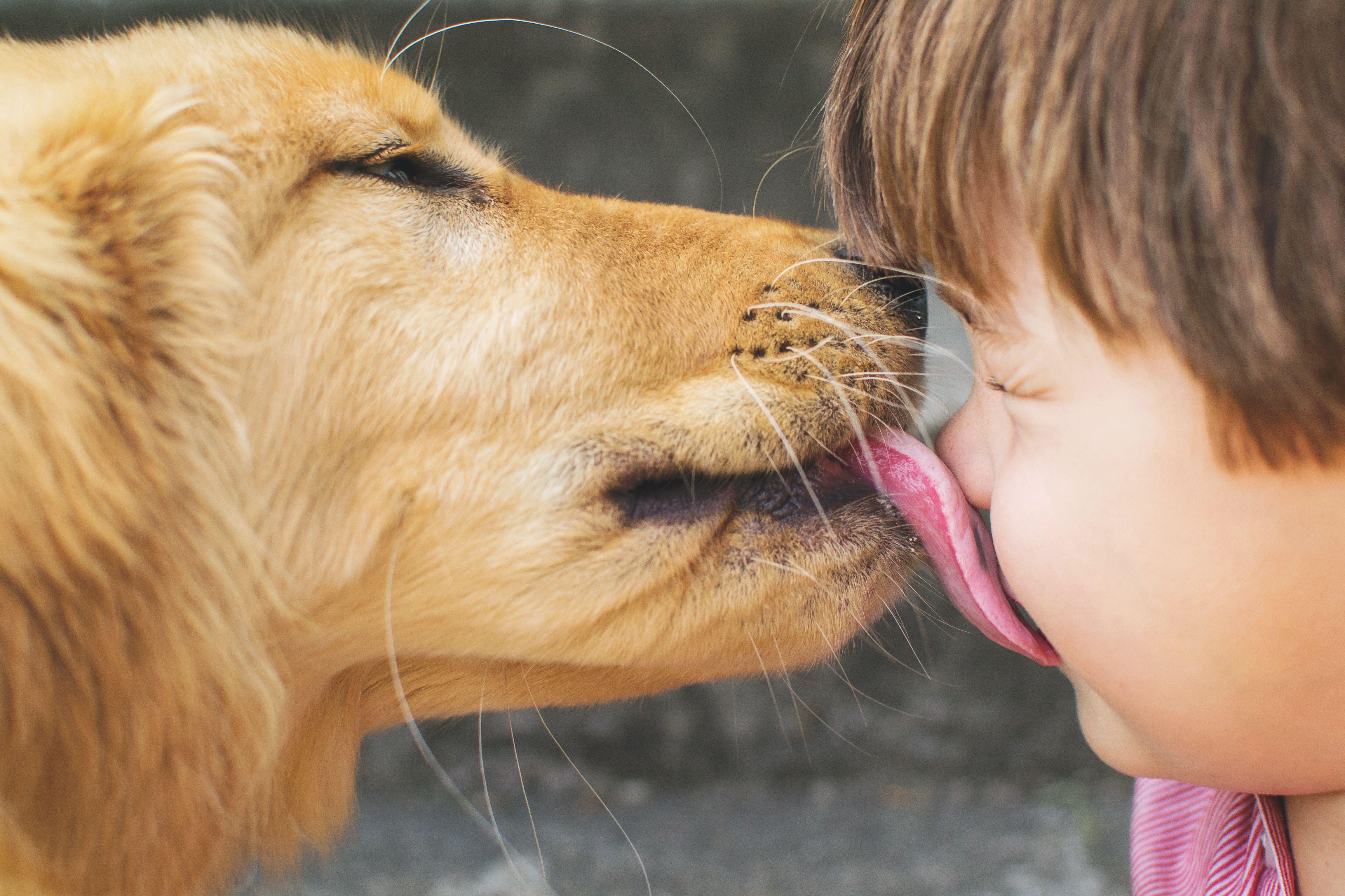 вы целуете своих домашних животных фото проявить смекалку
