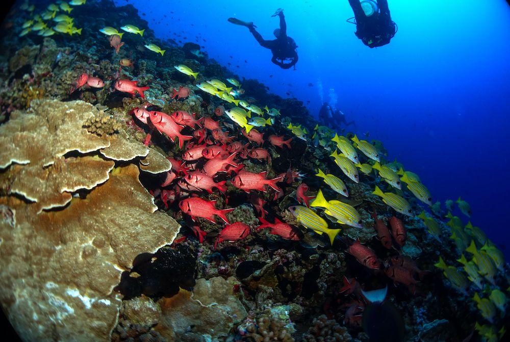 Scuba divers swim towards a reef of colorful fish