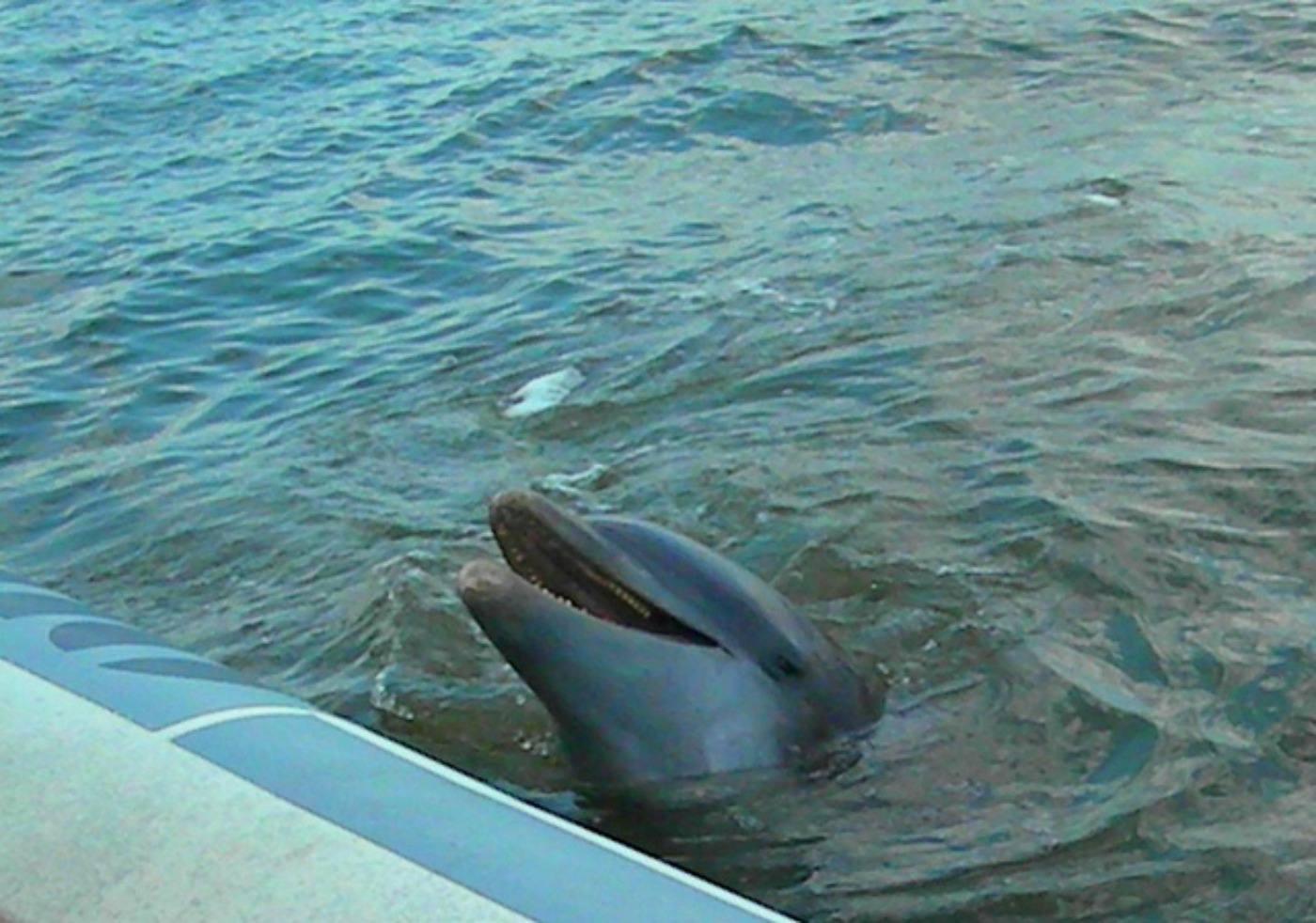 Dolphin Cruise Hilton Head