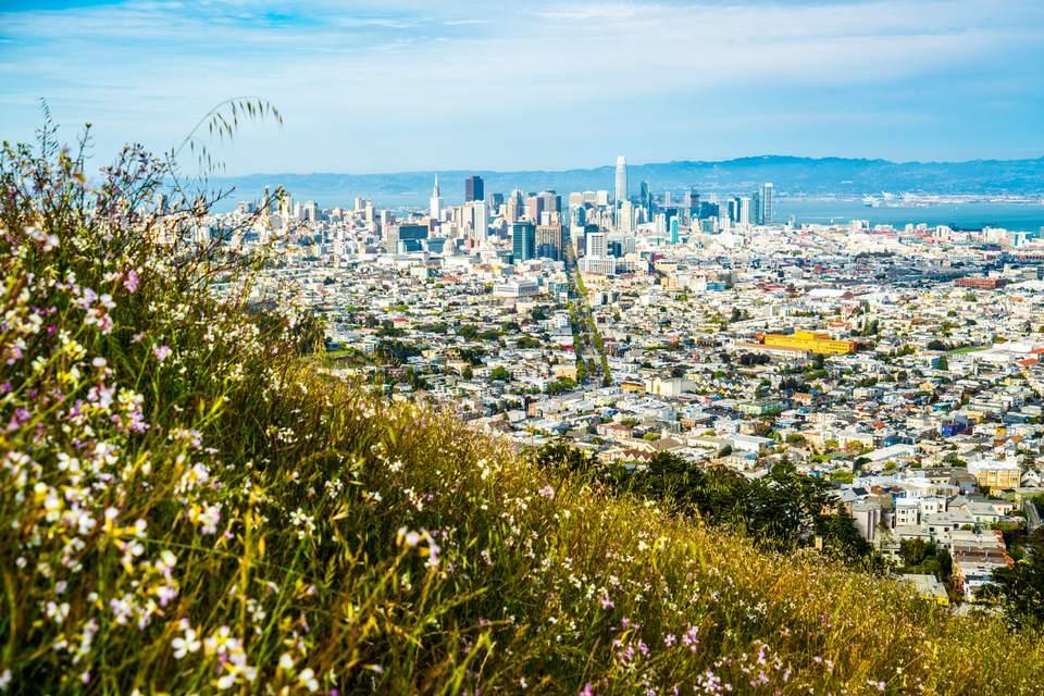 Flores de primavera en Twin Peaks en San Francisco, California
