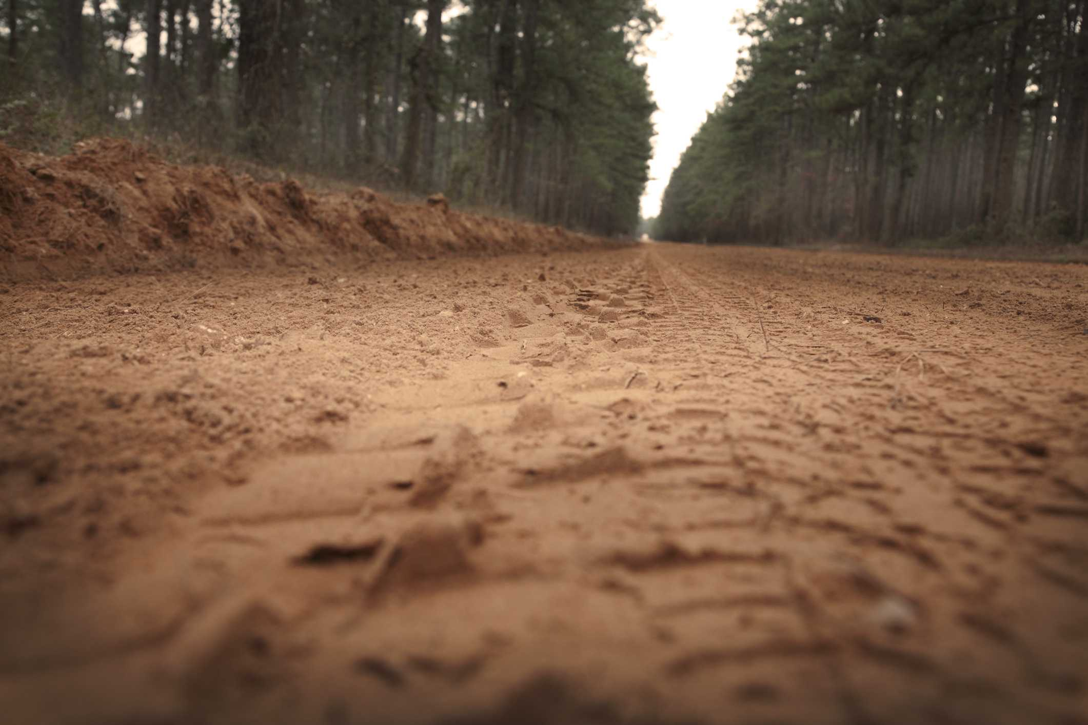 Close-up of dirt road, Sam Houston National Forest, Texas, USA