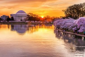 The Cherry Blossom Festival in Washington, D.C.