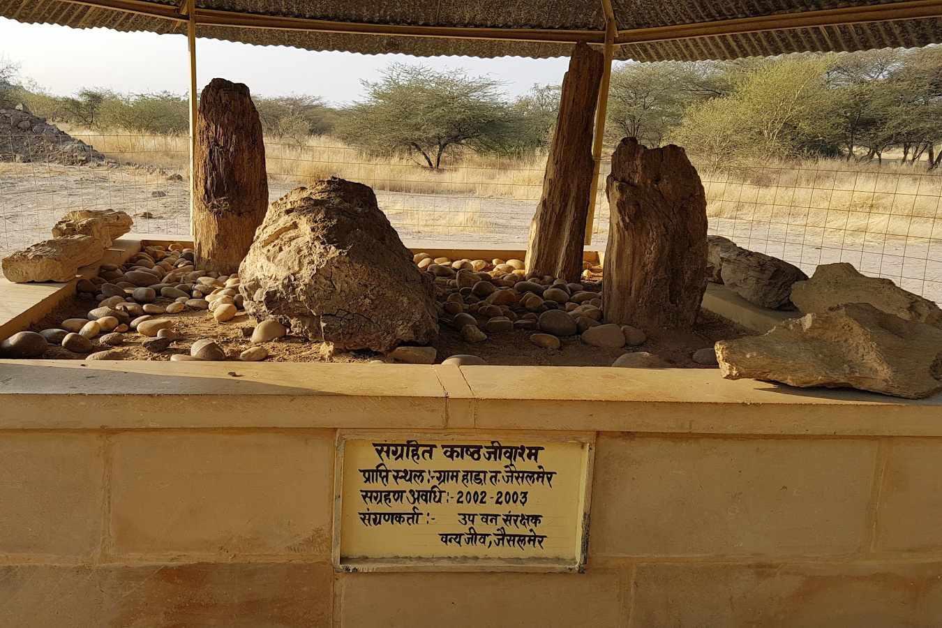 Akal Wood Fossil Park, Jaisalmer.