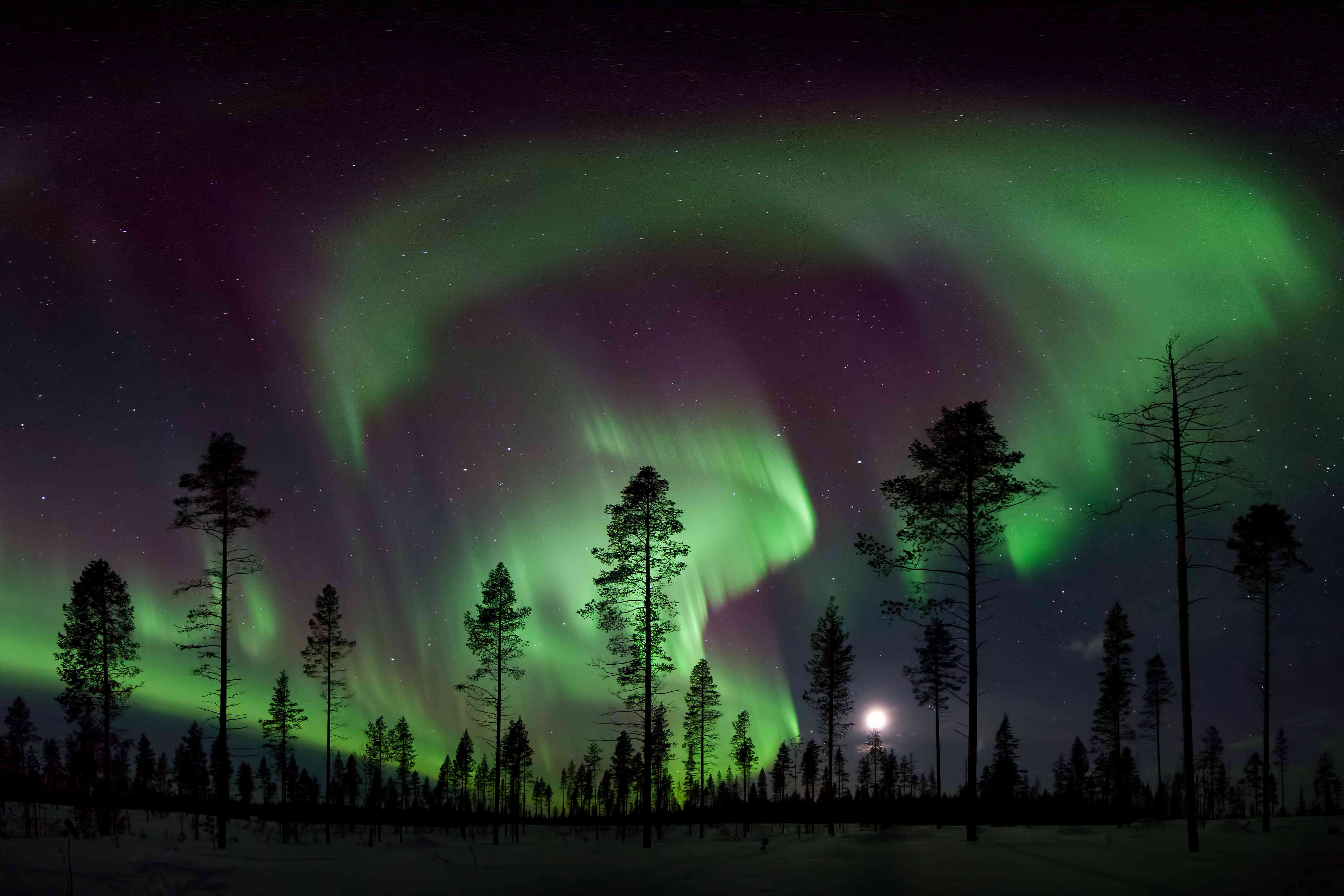 Northern Lights over a forest in Sweden