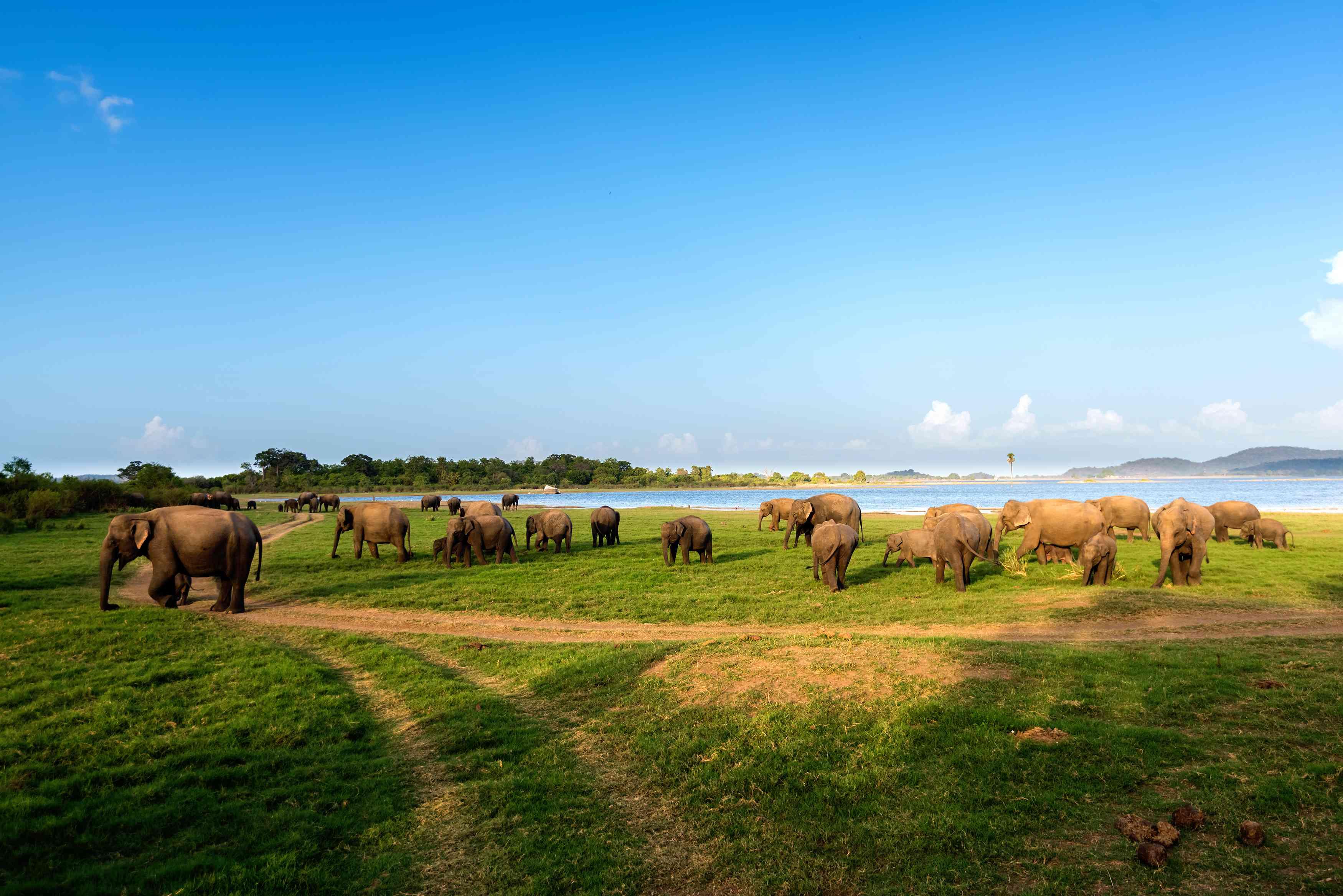 Wild elephants spotted during safari in Sri Lanka