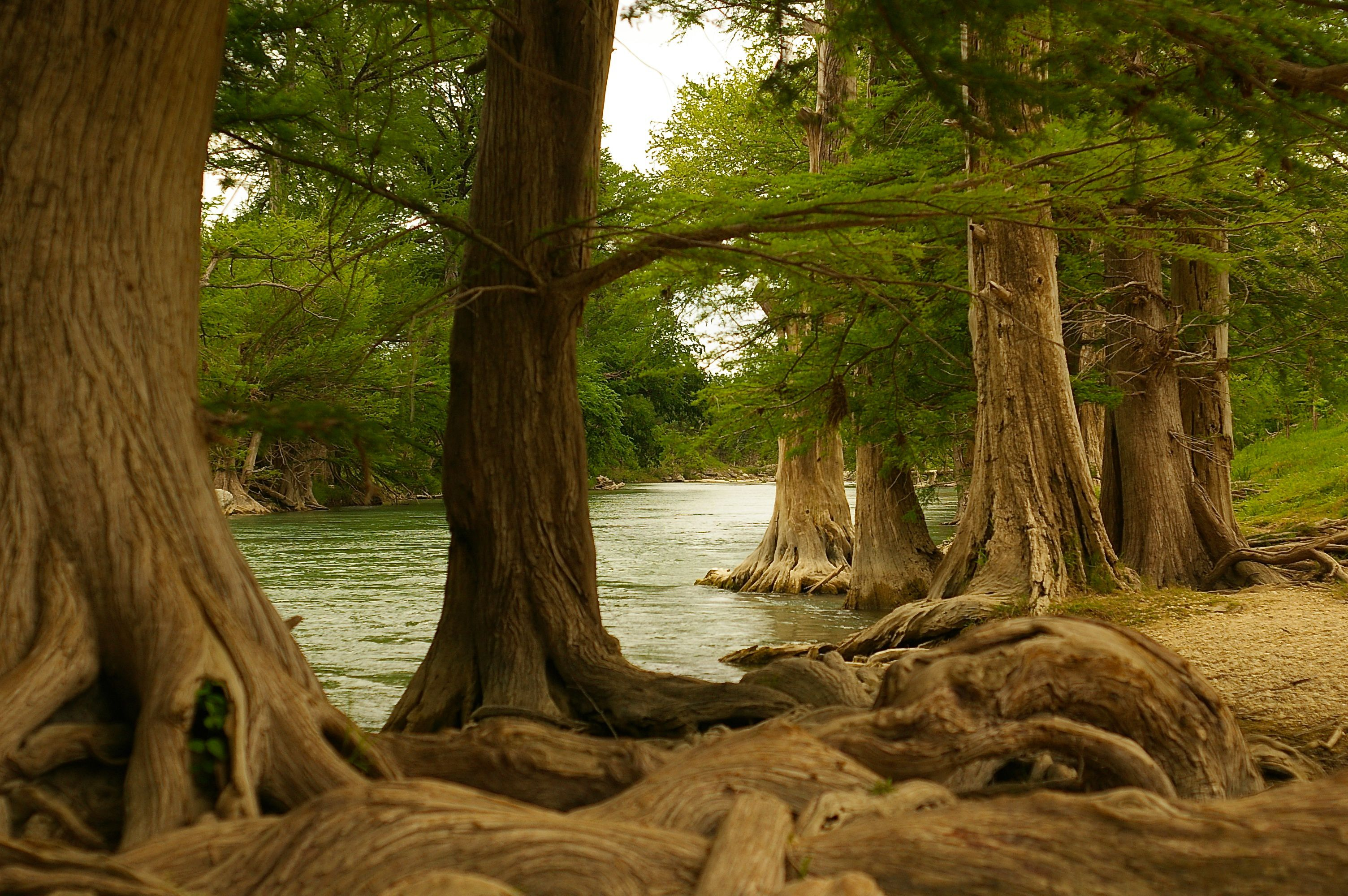 Trees along Guadalupe River