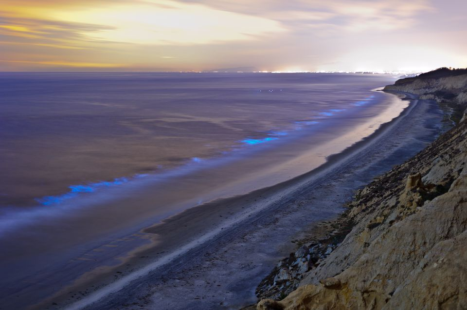 Everything You Need To Know About Red Tide In California