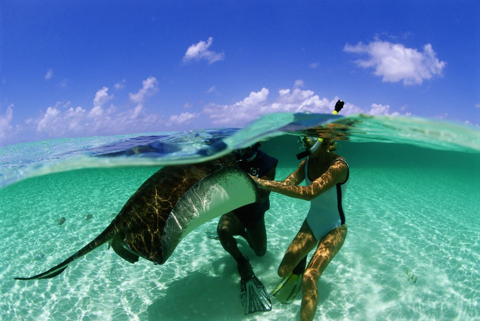 Two snorkelers touching southern stingray, surface view