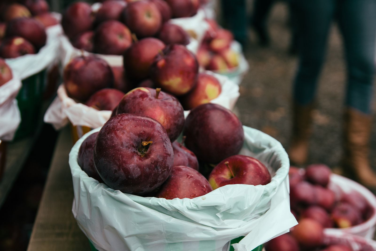 Apple orchards near Montreal