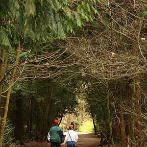 Great Vancouver Hikes: Pacific Spirit Park