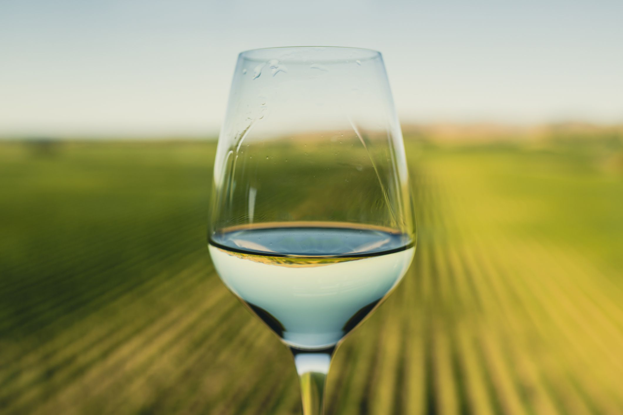 glass of white wine with vineyards in the background