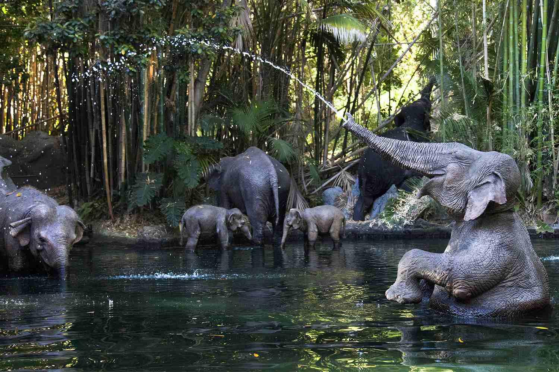 Elephants on the Jungle Cruise