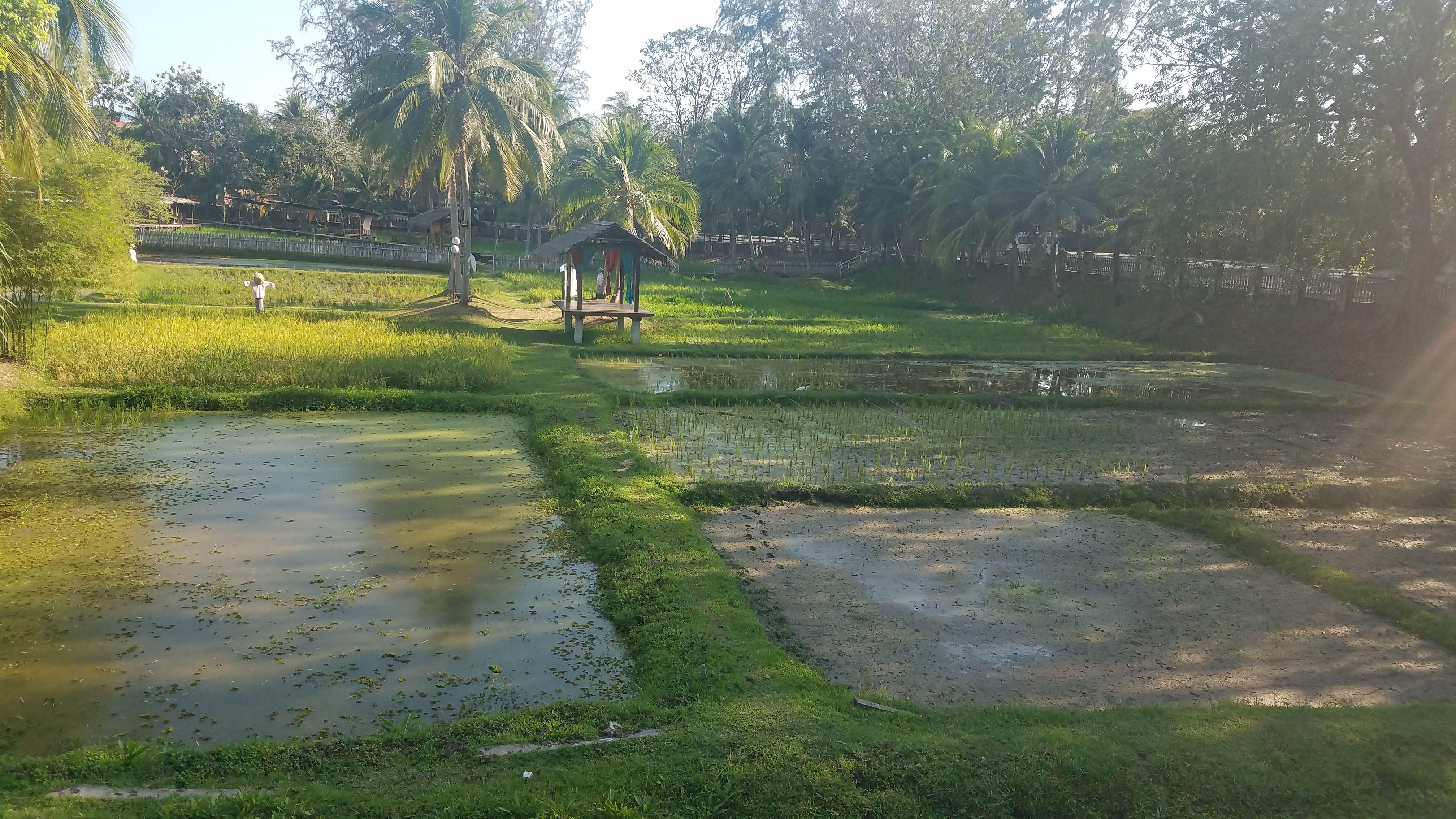 Laman Padi Rice Garden Pantai Cenang