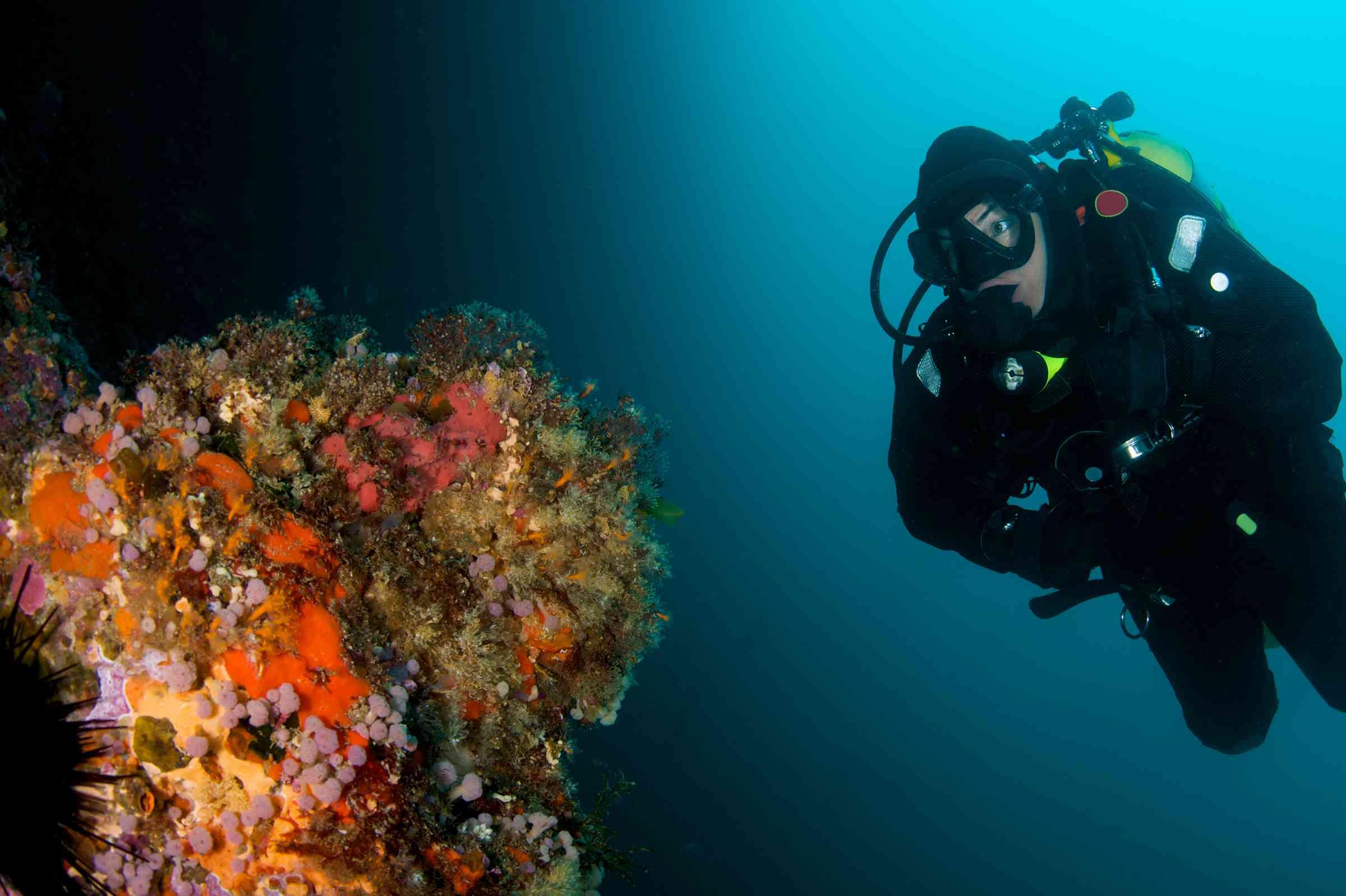 scuba diver looking at orange coral