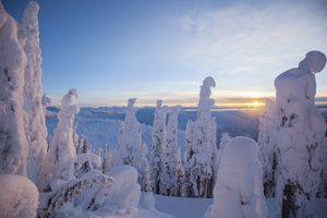 USA, Montana, Whitefish, Trees covered with fresh snow