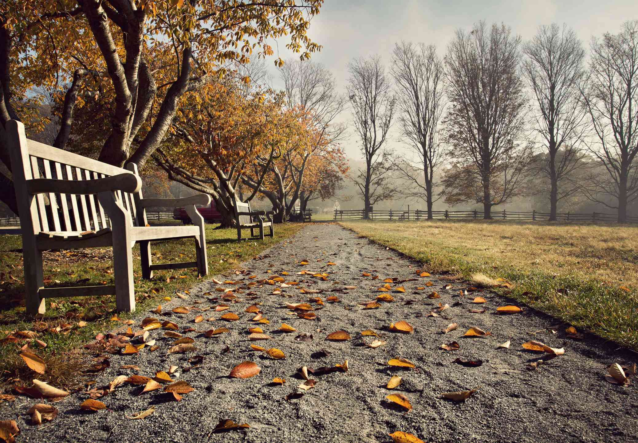 A fall view in Sagamore Hill in Oyster Bay
