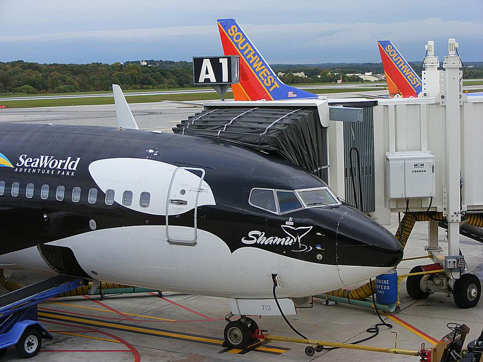 Southwest Shamu plane at BWI Airport