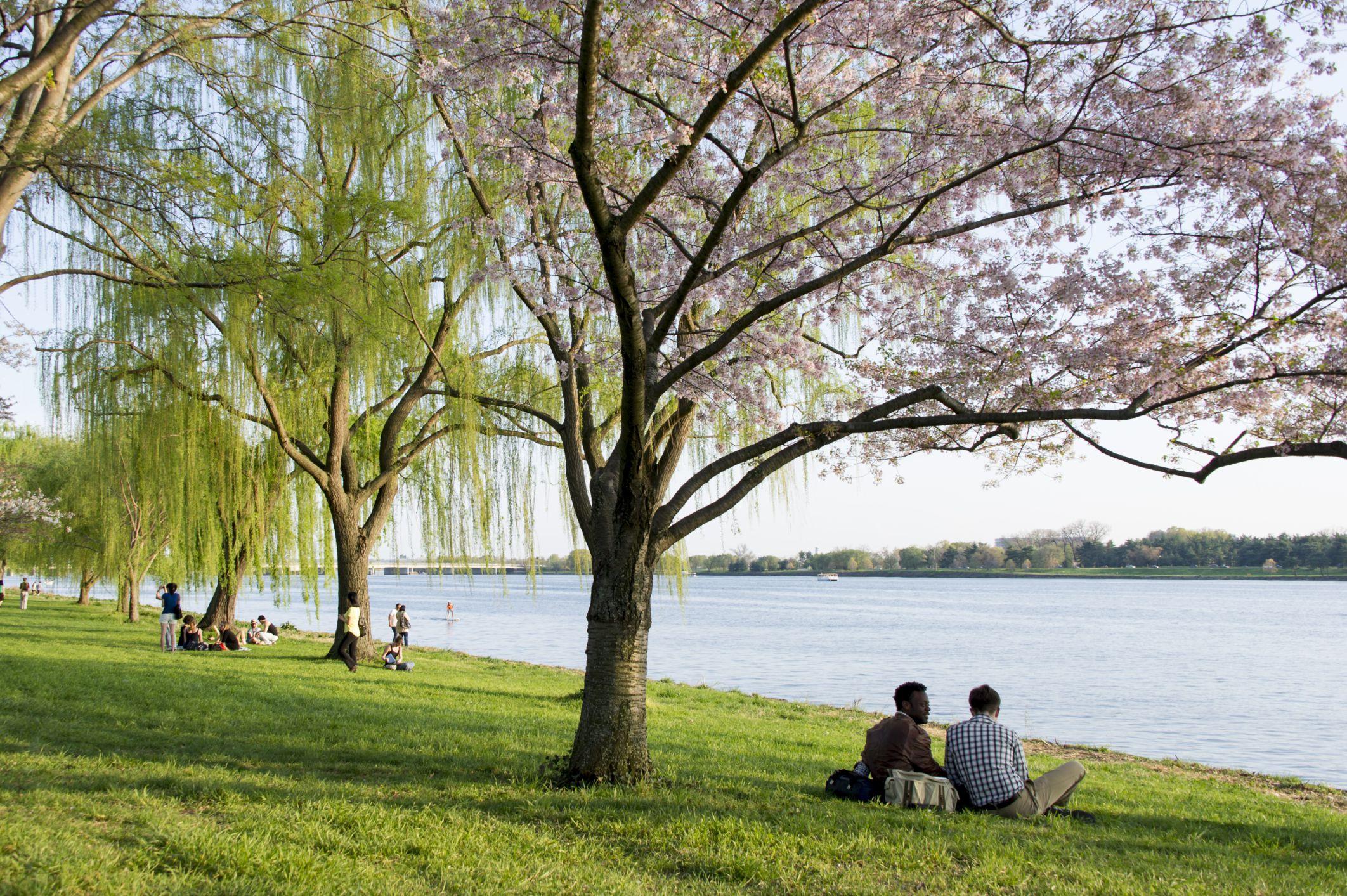 Potomac River Islands
