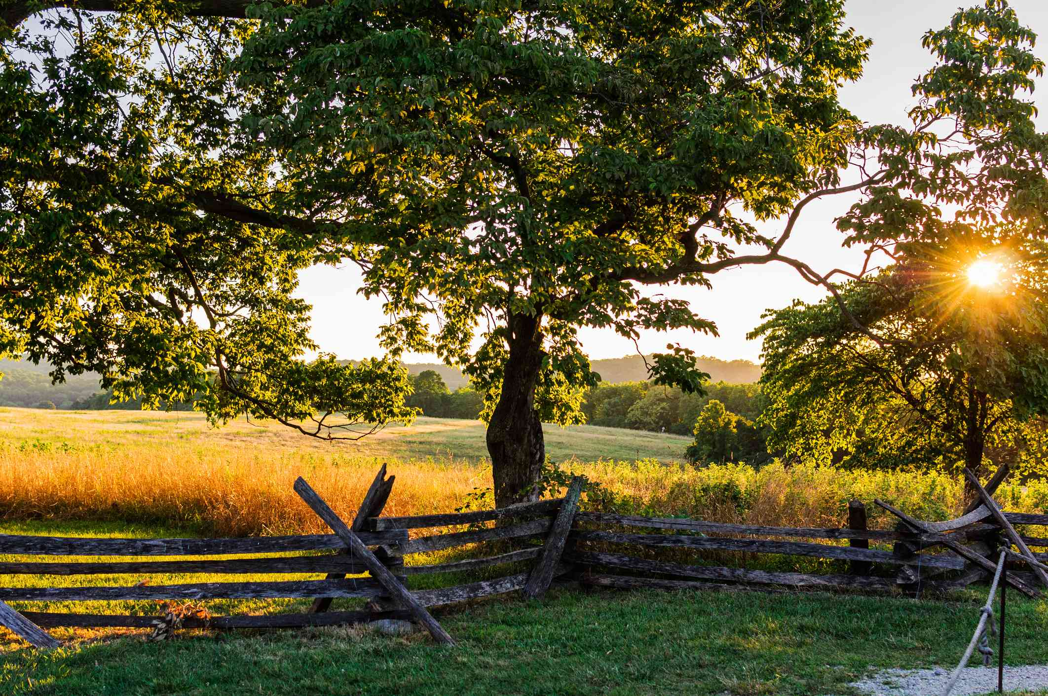 Trees and a field along a fence in Valley Forge, PA