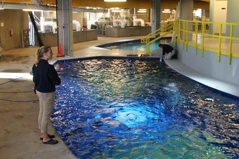 Behind the Scenes Tour at Odysea Aquarium
