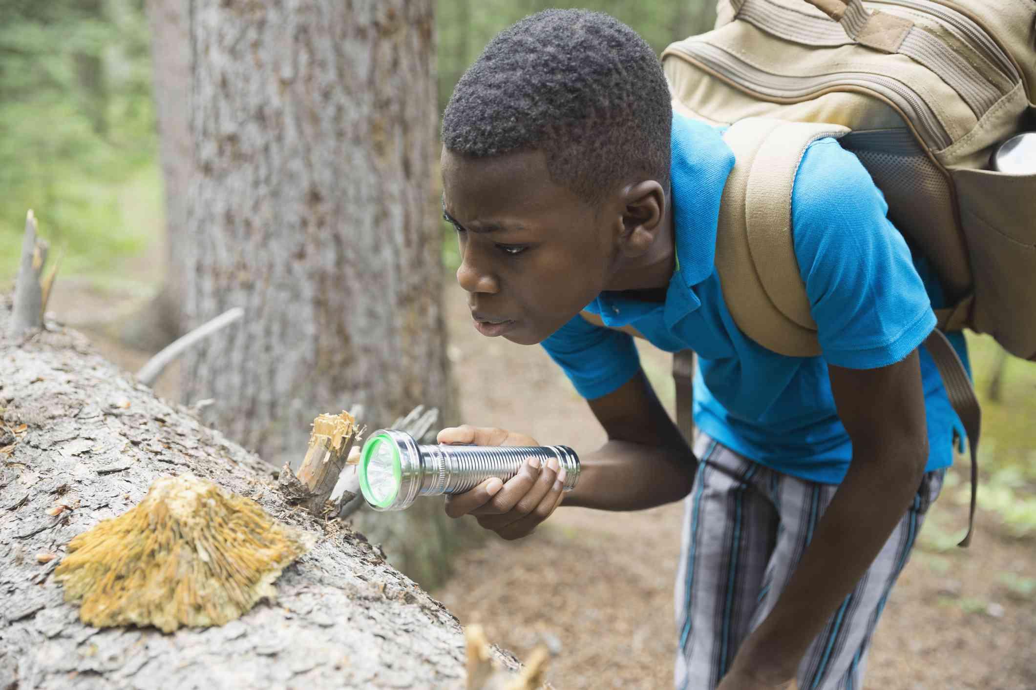 A young boy examining fungus with a flashlight.