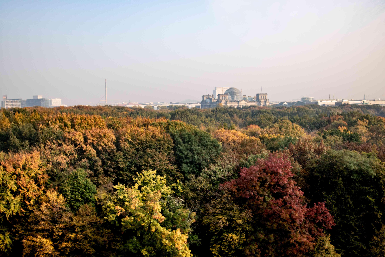 A top view of the trees in Tiergarten