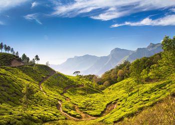 Bright and vivid landscape of green tea plantations in India Kerala, Munnar.