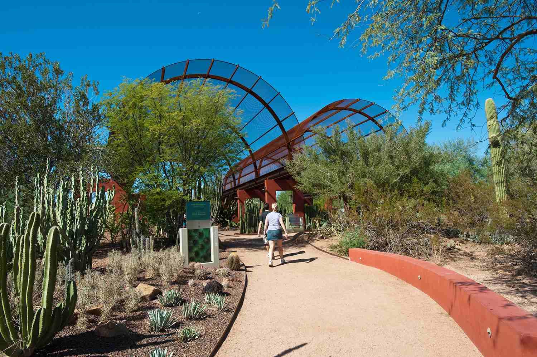 Cactus gallery at Desert Botanical Garden, Phoenix, Arizona, USA
