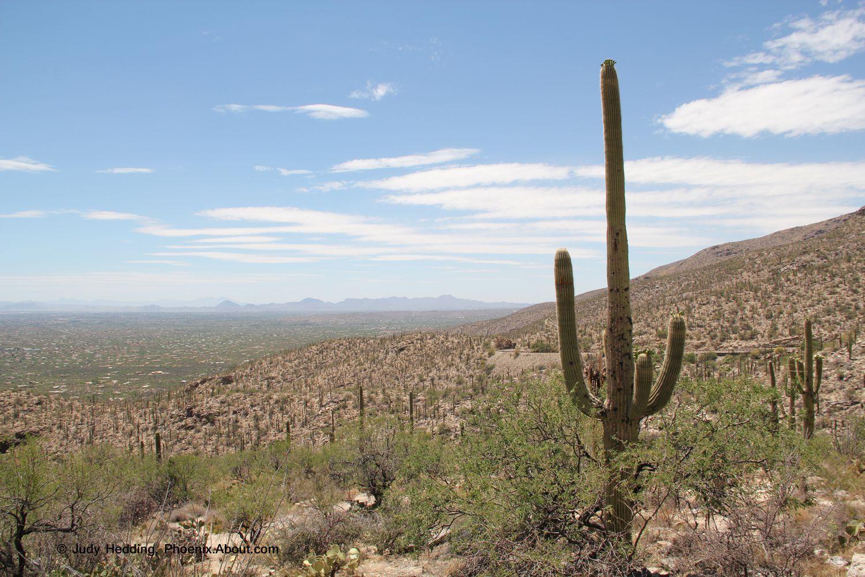 ツーソン アリゾナ 州