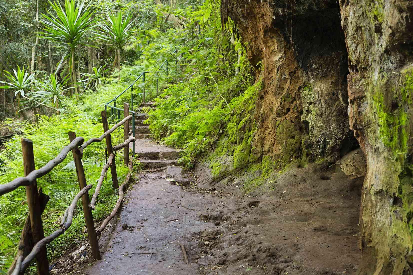 Trail through Karura Forest, Nairobi